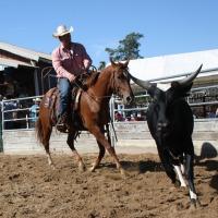 horsesale2